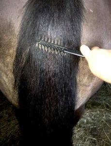 pet-comb-4