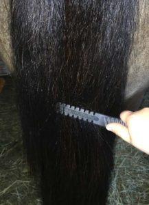 pet-comb-5